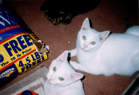 Photo of innocent white cats raiding food bag