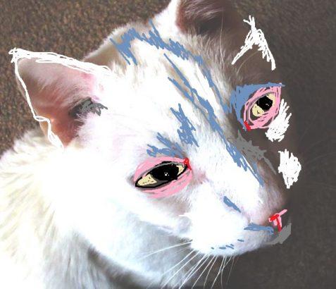 Stylized photo of white cat fish eye lens