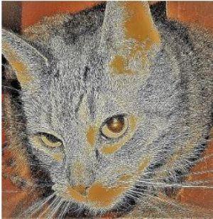 stylized photo of striped cat art for poem A Little Joy