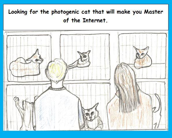 Cartoon of photogenic cats