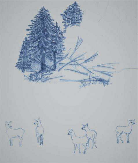 Pencil drawing of pine trees and deer
