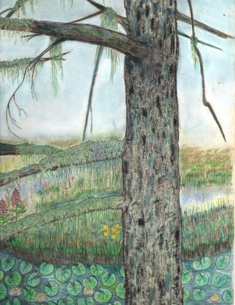 colored-pencil drawing pine water lillies and Spanish moss art for poem The Loath of Oilty