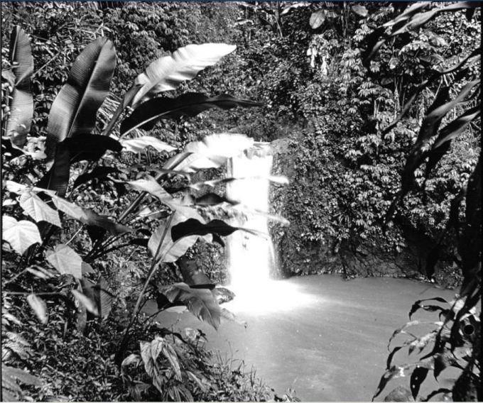 Photo of Martinique botanical garden 1899