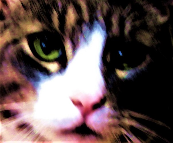Digitalized photo of cat face