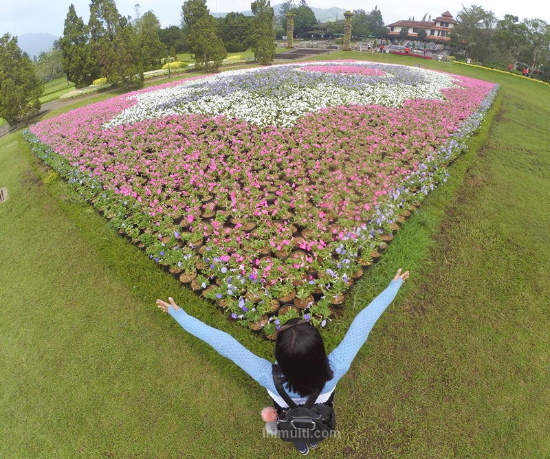 tiket pesawat murah ke taman bunga nusantara