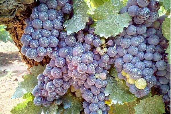 degustation-de-vin-moldavie