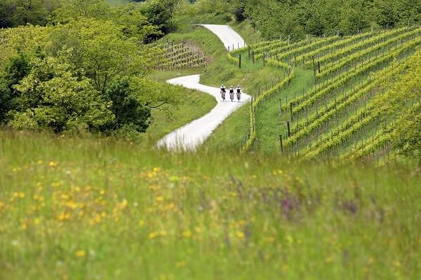 sejour-velo-vin-et-gastronomie-slovenie-route-des-vins