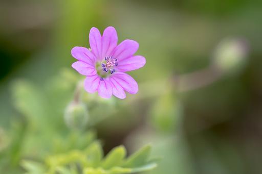 focale 105 mm pour la macro-photographie