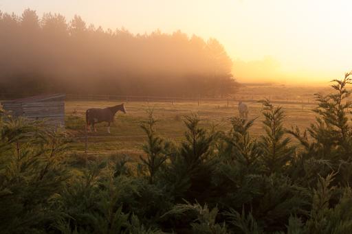 Ambiance matinale en automne