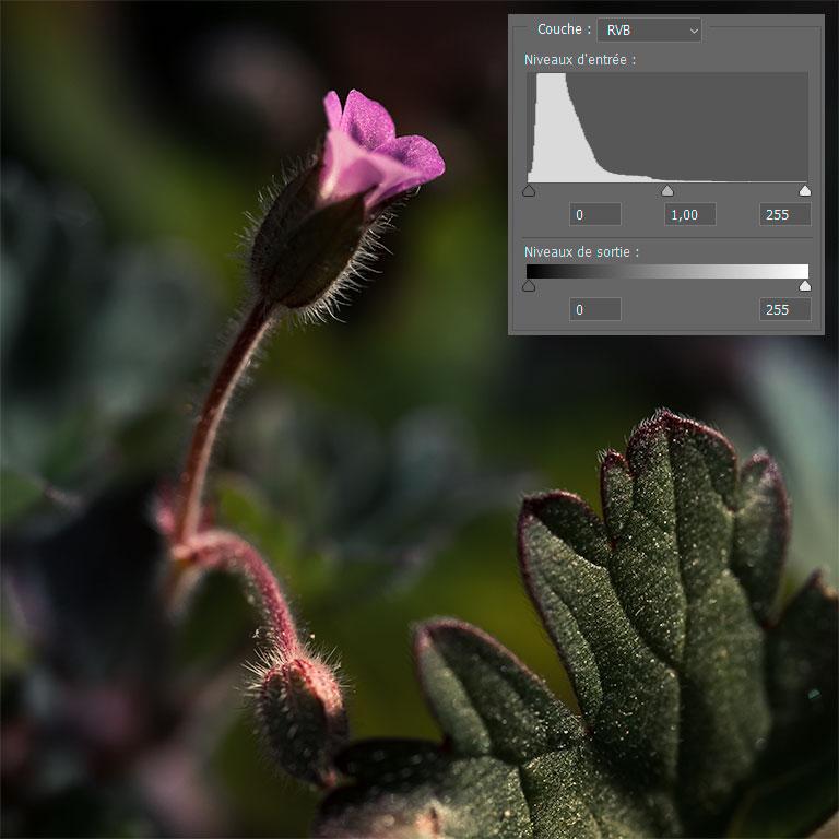 Illustration d'une photo représentant des tons sombres avec un histogramme tassé sur la gauche