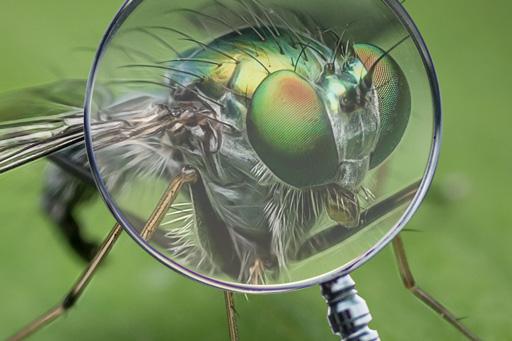 Illustration de l'article à propos de l'intégration d'objet transparent dans un photomontage