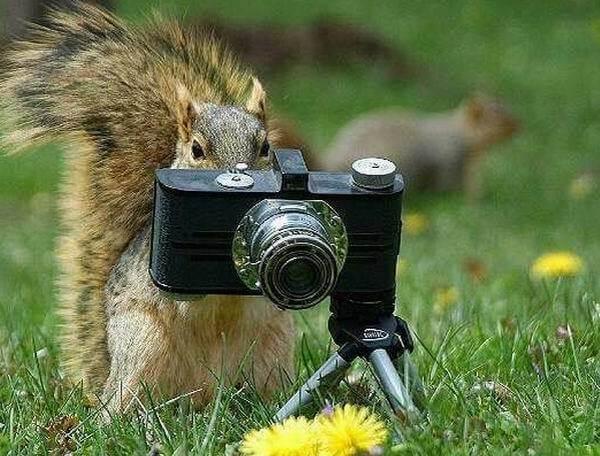 squirrel likes camera