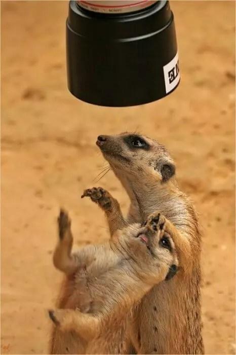 lemurs love camera