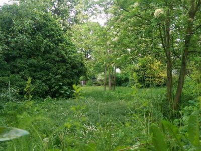 Friedhof Selzen
