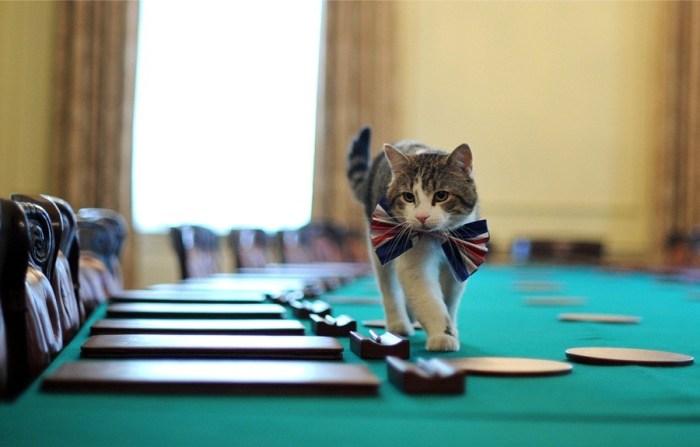 кот ларри1