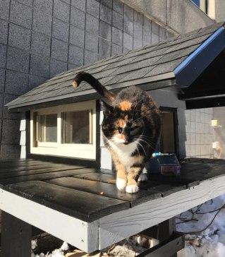 cops-build-stray-swat-cat-condo-6