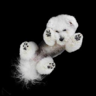 6-Under-dogs-58ec83b372ada__880