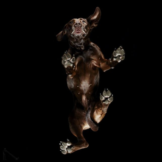 8-Under-dogs-58ec83b951b98__880