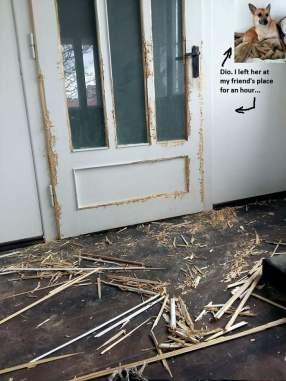 dio_door-58e922f320659__700