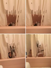share-the-mess-your-pets-made-when-you-left-them-alone-117-58eccfd15d8c6__700