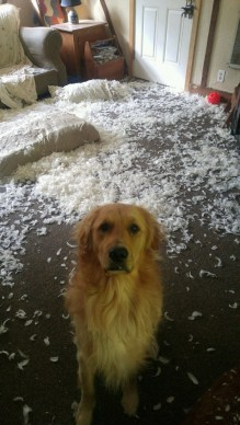 share-the-mess-your-pets-made-when-you-left-them-alone-92-58ee29c24861f__700