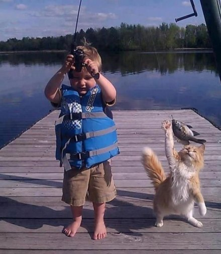 pets-caught-red-handed-stealing-animals-18-5952003368a97__605