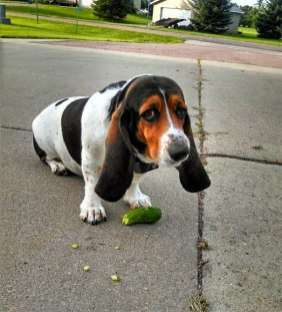 pets-caught-red-handed-stealing-animals-201-5950fc687801d__605