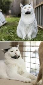 animals-with-unusual-fur-markings-13-59ae57ed3dac4__605