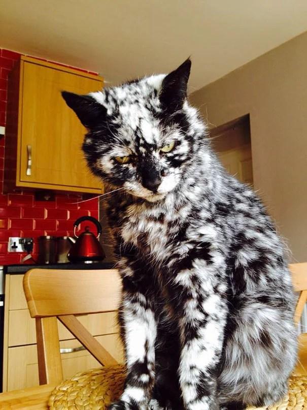 animals-with-unusual-fur-markings-16-59ae6da551934__605
