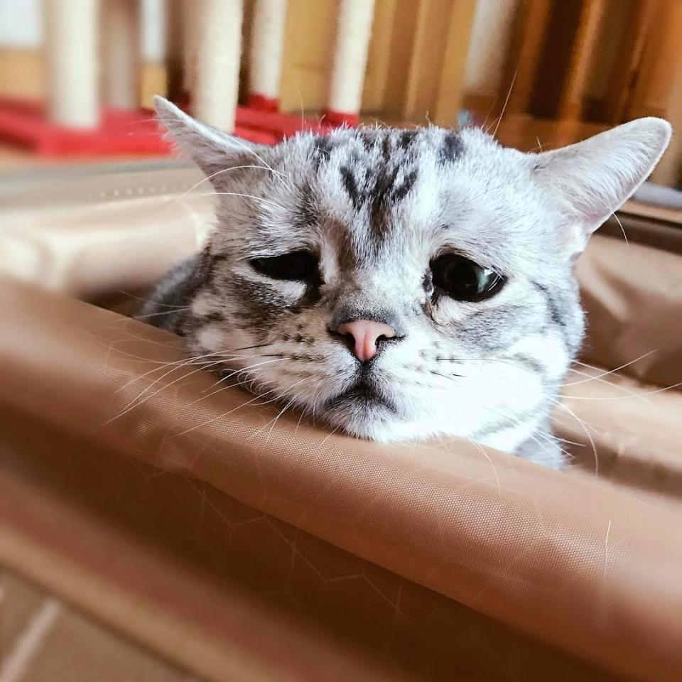 фото грустной кошки популярна