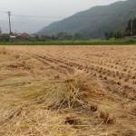 ゼロエミ式きのこ栽培稲藁