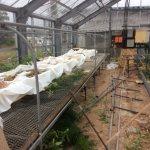 ゼロエミ式きのこ栽培