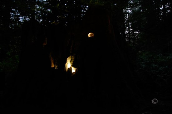 The Stump at night.