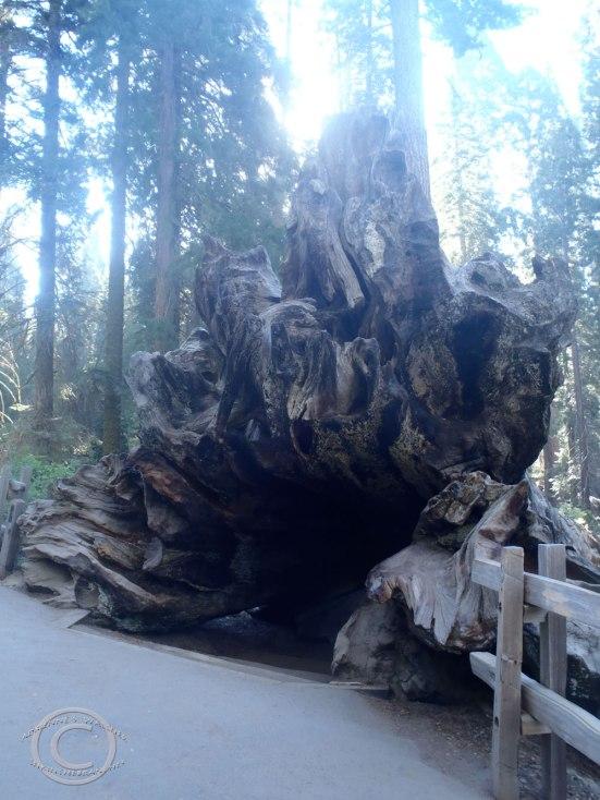 Root remnants of The Fallen Monarch
