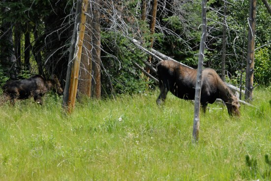 Moose No. 3 & No.4