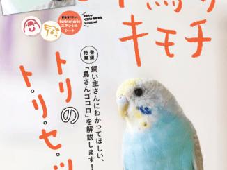 小鳥のキモチVol4表紙