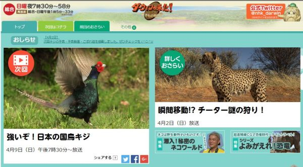 ダーウィンが来た「強いぞ!日本の国鳥キジ」
