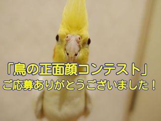 #鳥の正面顔コンテスト