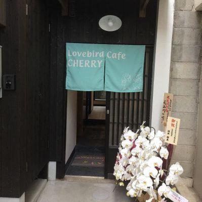 鳥カフェLovebird Cafe CHERRYのお店の外観