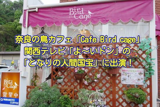 奈良の鳥カフェ「Cafe Bird cage」が関西テレビの「よ~いドン!」の「となりの人間国宝」に登場!