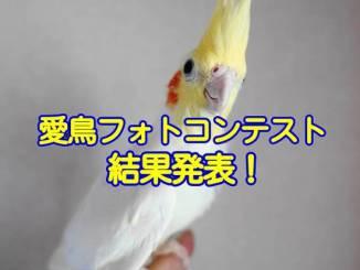 愛鳥フォトコンテスト「自慢の愛鳥の表情」総合結果発表