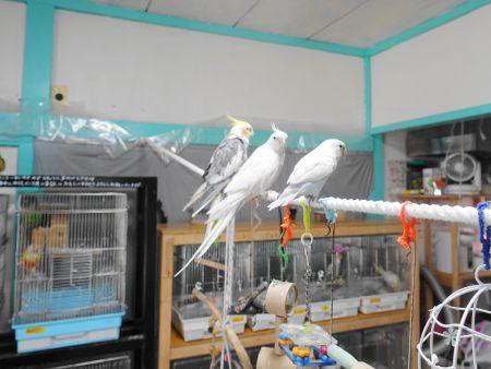 ことりのおうちの鳥部屋の様子・雰囲気