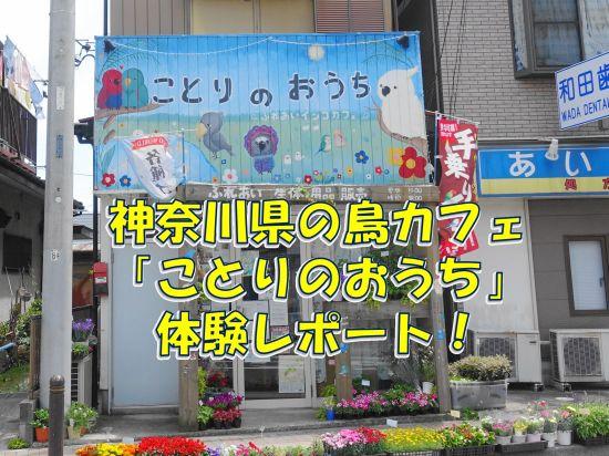 神奈川県の鳥カフェ「ことりのおうち~ふれあいインコカフェ」体験レポート