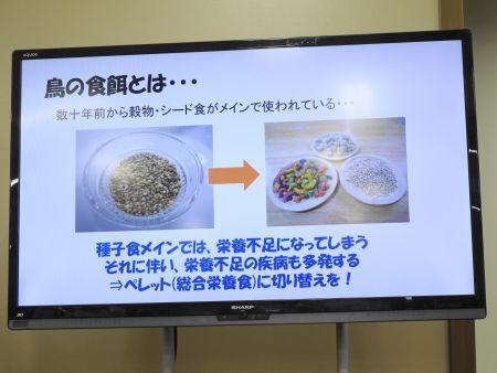 栄養不足になりやすいシード食からペレット食への切り替え