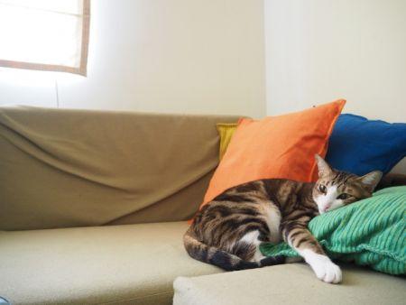 飼い猫は完全屋内飼育で外に出さない飼育方法
