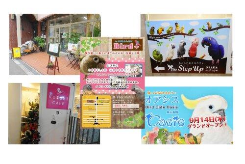 大阪の鳥カフェまとめ・小鳥ひろば・ことりカフェ心斎橋・The Step up OSAKA・バードカフェオアシス・MIRAI up Bird+