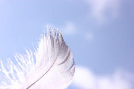 鳥の羽が鳥アレルギーの原因物質
