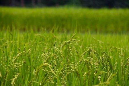 野鳥による農作物の被害は大きい