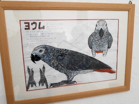 池田はなえ氏のヨウムのイラスト・スケッチ