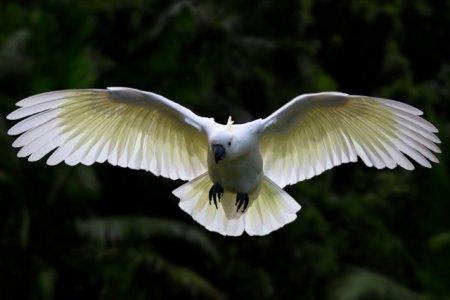 インコなどの鳥には翼があり、飛ぶことができるため迷子になりやすい